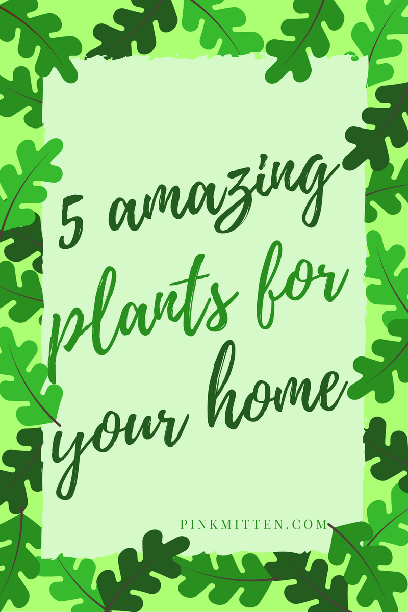 5 Amazing Plants for your Home @pinkmitten.com #garden #gardening #flowers #plants